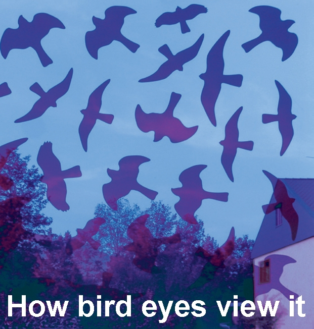 Bird Protection With Invisible Window Decals Birdsticker - Invisible window decals for birds